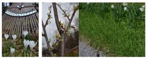 kevätpiha