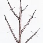 mallikuva puiden leikkaamisesta