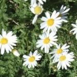 Istutustyöt ja kukkia